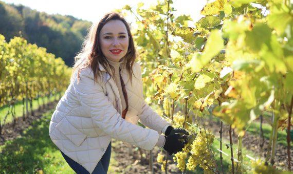 Команда Regno долучилася до збору врожаю винограду
